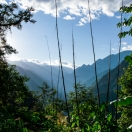 Main features of Arunachal: bamboo, banana, hills and the sun