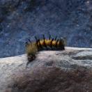 Гусеница, накурившаяся кальяна