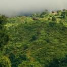 Тропа в деревню