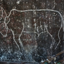 Митун, вырезанный на скале над Брахмапутрой