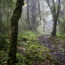 A trail in jungle