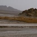 Мумии травы