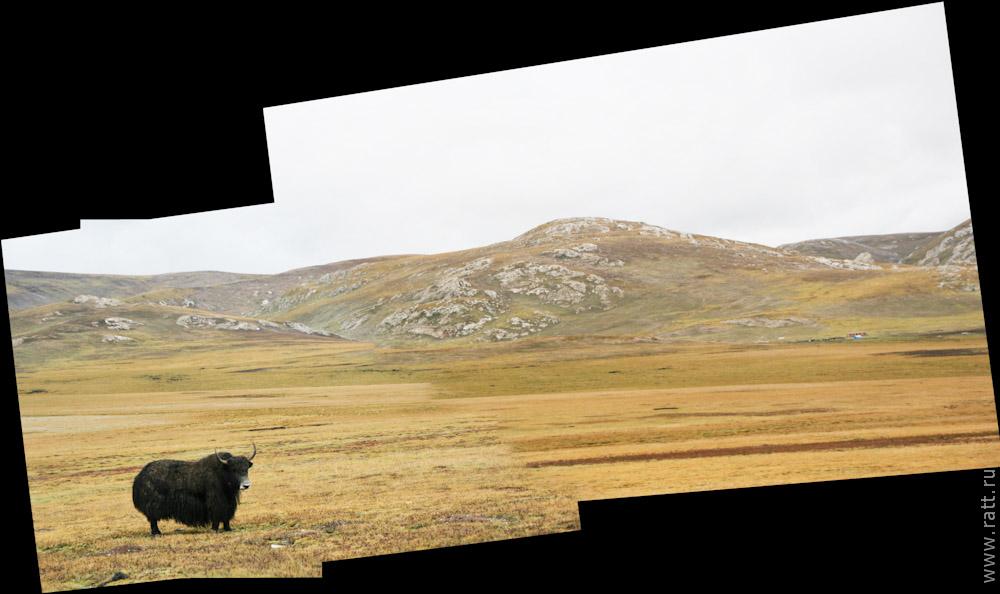 Одинокий як на просторах Тибета