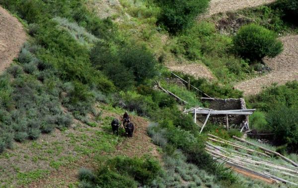 Яки распахивают огороды в деревне Тумба