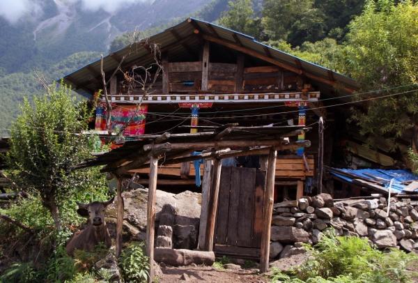 Одноэтажные дома мемба строятся из дерева
